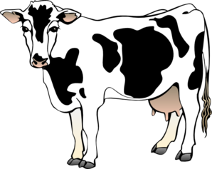 dairy cow clip art at clker com vector clip art online royalty rh clker com clipart of cow black and white clipart of cow face