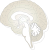 The Human Brain Clip Art