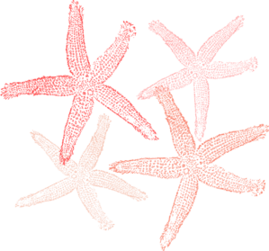 Starfish Colors Clip Art