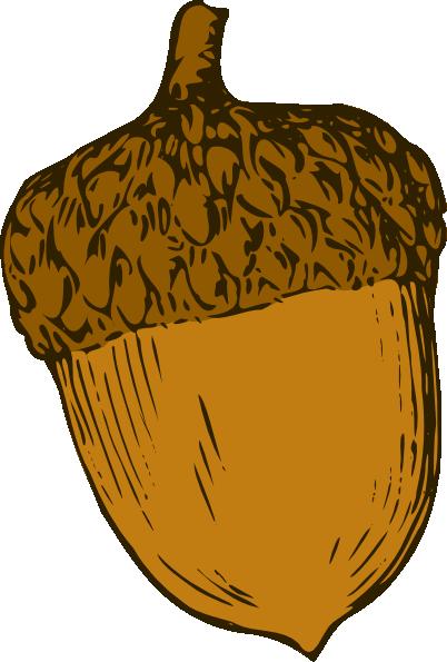 Вектор желудь 2