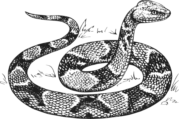 Line Drawing Snake : Copperhead snake clip art at clker vector