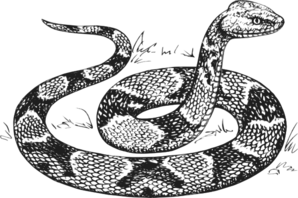 Copperhead Snake Clip Art