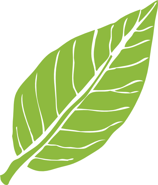 Lanceolate Leaf 3 Clip Art at Clker.com - vector clip art online ...
