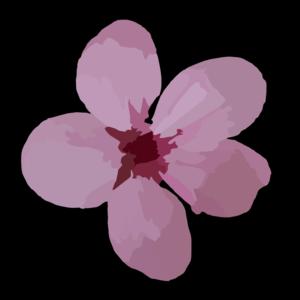 Plum Blossom clip art
