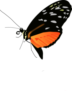 Lighter Orange-black Butterfly Clip Art