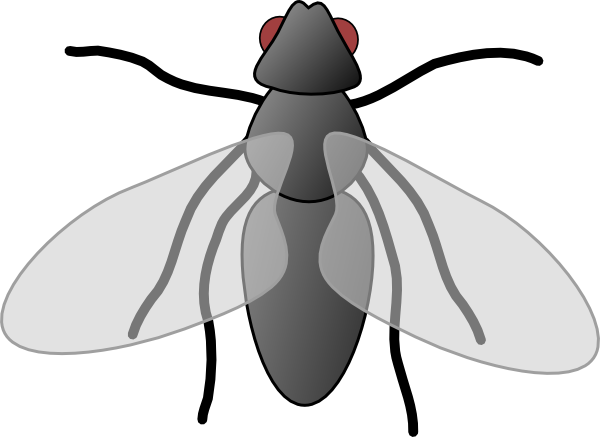 animated fly clipart - photo #16