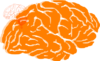 Orange Brain Clip Art