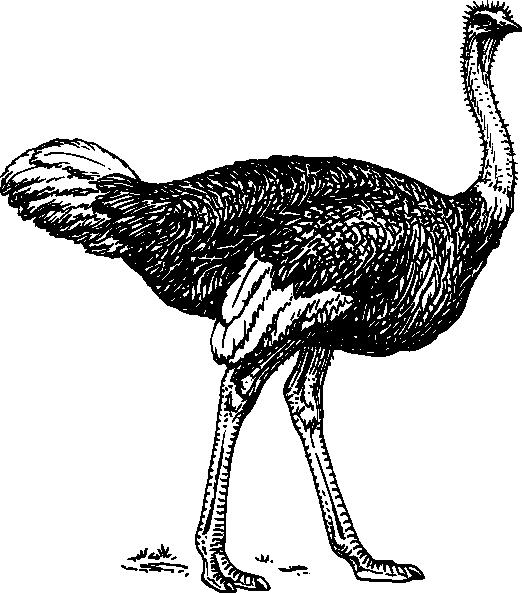 Ostrich clip art at vector clip art online royalty free public domain - Autruche dessin ...