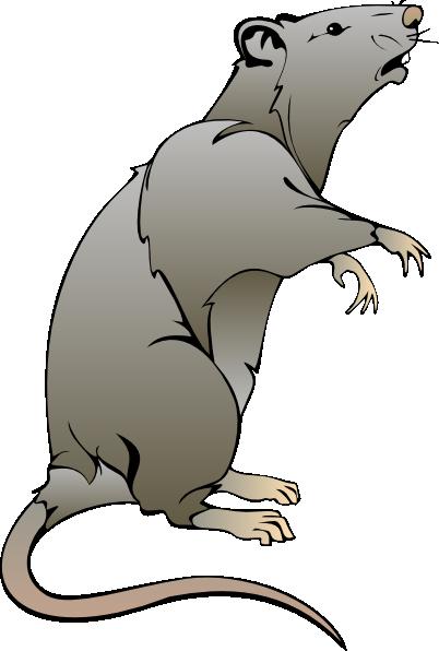 Rats drawing cartoon - photo#18