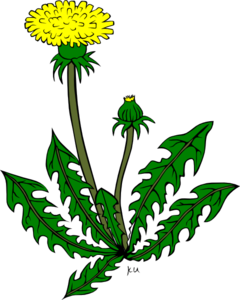 dandelion weed clip art at clker com vector clip art online rh clker com dandelion clipart black and white dandelion clipart black