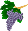Purple Grapes Clip Art