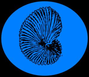 blue shell clip art at clker com vector clip art online royalty rh clker com Cartoon Shell Clip Art Cartoon Shell Clip Art