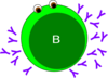 B-cell Green Clip Art