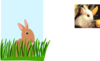 Rabbit In Grass Clip Art