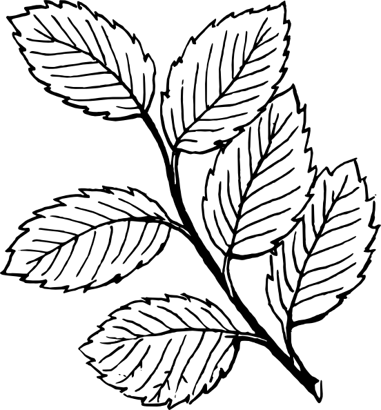Mint Leaves Clip Art Black And