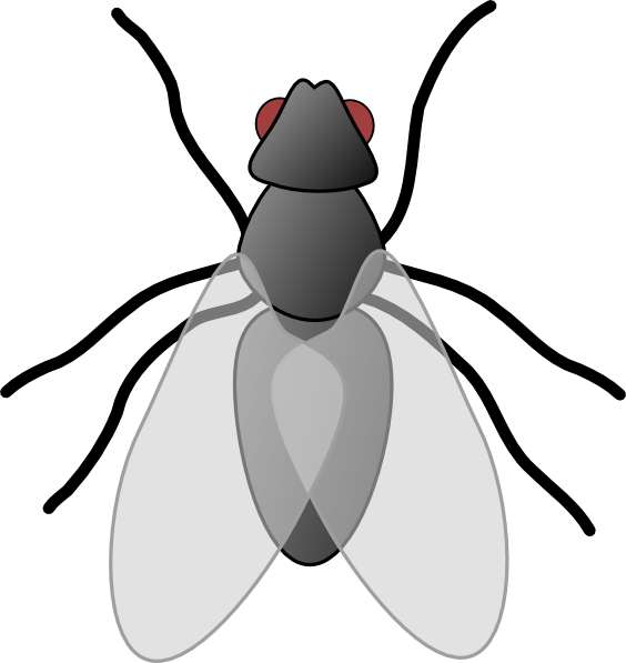 animated fly clipart - photo #2