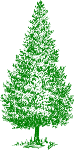Greencedartree Clip Art