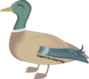 Kelly R Duck  Clip Art