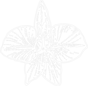 White Orchid Outline Clip Art
