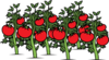 Clearer Tomato Patch Clip Art