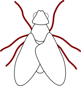 Fly Line Drawing Clip Art