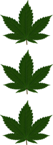 Three Cannabis Leaves 2 Clip Art