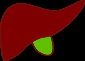Liver New Clip ArtLiver Clipart
