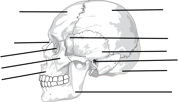 search results for  u201cdiagram and label of a skeleton