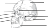 Label The Bones Of The Skull Clip Art
