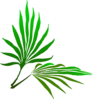 Palm Sunday Branch Clip Art