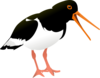 Oyster Catcher Clip Art