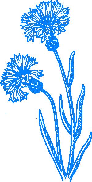 Blue Cornflower Sketch Clip Art at Clker.com - vector clip art online ...