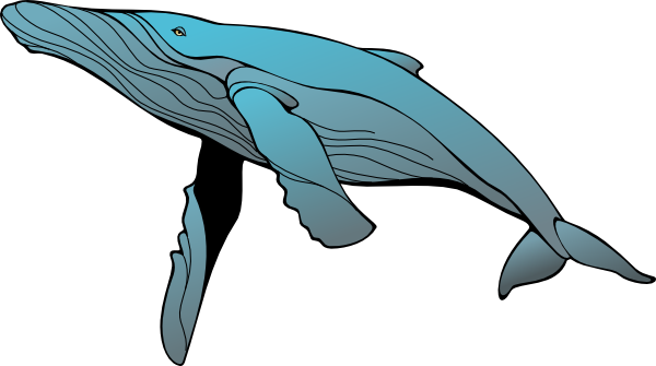 Humpback whale clipart - photo#1