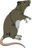 Grey Greedy Rat  Clip Art