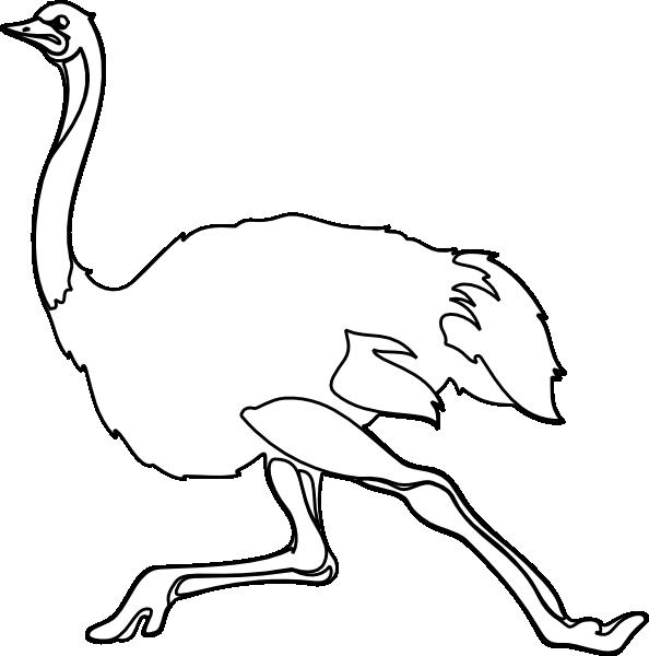 Line Art Emui : Ostrich outline clip art at clker vector