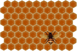 Bee On Honeycomb Clip Art