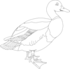 Black And White Duck Clip Art