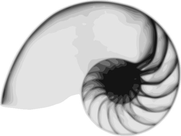 Line Art Nautilus : Nautilus clip art at clker vector online