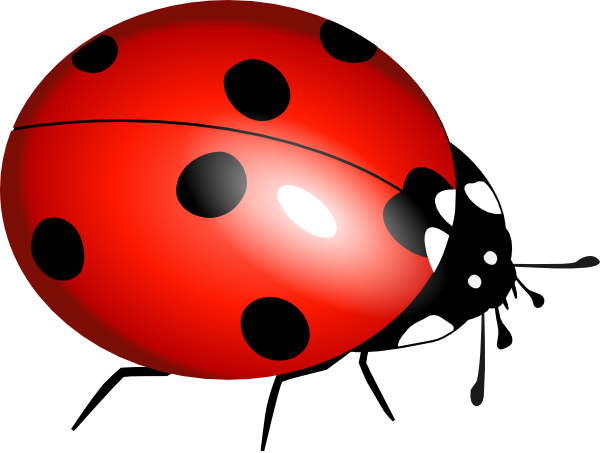 clip art of a ladybug - photo #7