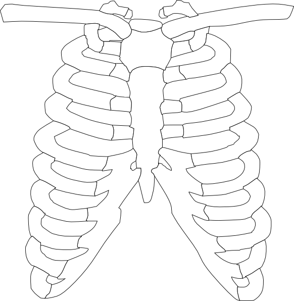 Diagram Of Sternum And Ribs Toyskids