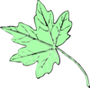 Light Green Maple Leaf Clip Art
