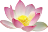 Lotus Flower Clip Art