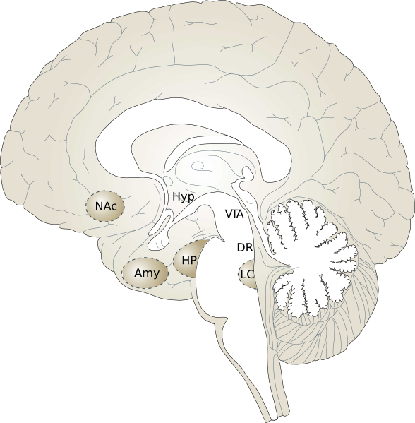 human brain diagram. Human Brain clip art