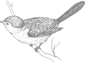 Bird On Branch Clip Art