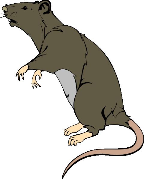 grey greedy rat clip art at clker com vector clip art online rh clker com clip art rattlebrain clipart retirement