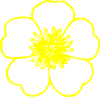 Yellow Buttercup Flower Clip Art
