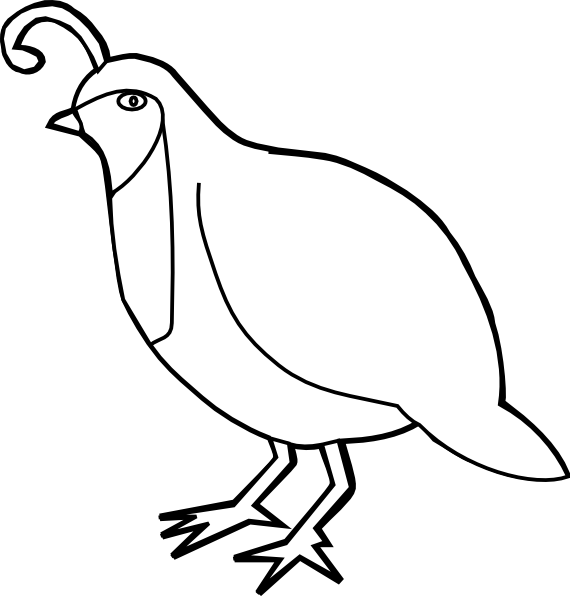 Line Drawing Quail : Quail outline clip art at clker vector