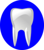 Tooth With Blue Outline Clip Art