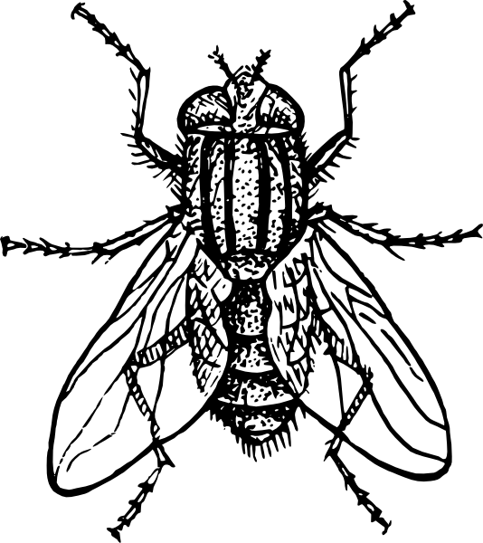 Diagram Of Housefly