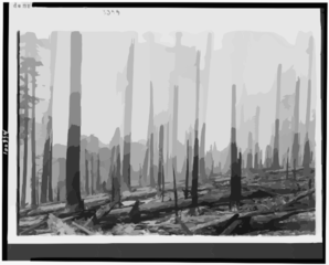 Oregon National Forest - Effect Of Fire On An Old Burn Clip Art